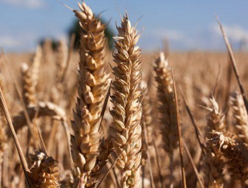 Nedflex agrarisch payrolling graan
