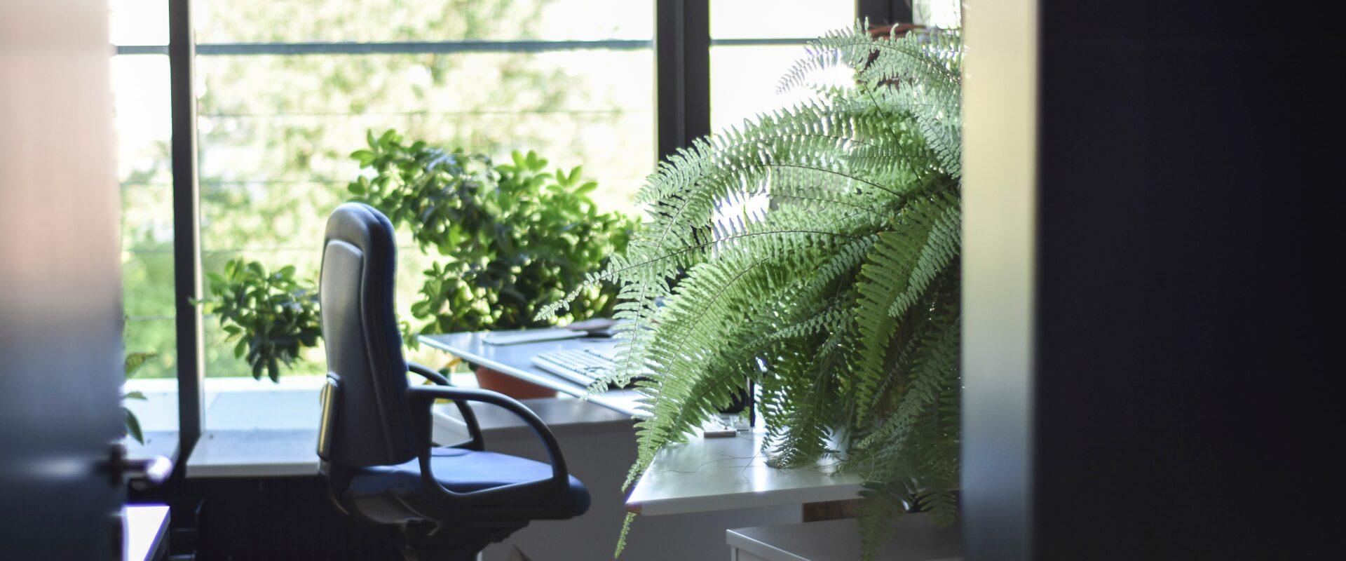 Werkplek kantoor met varen