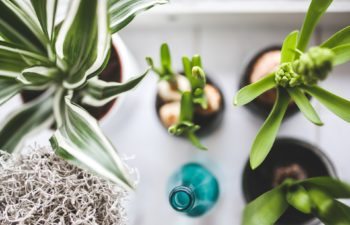 Groene plantjes